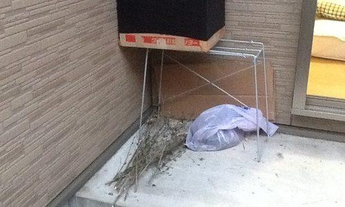 お金を一切かけずに生ゴミ堆肥用のダンボールコンポストを作る。 | 0円からの家庭菜園