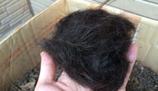 切った髪で実験:髪の毛は分解されて土に還って肥料にできるのか?