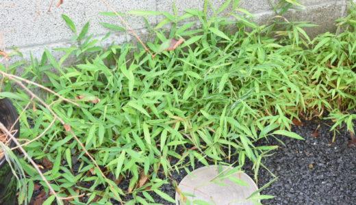 家庭菜園の土が欲しいので、近所の雑草を刈ってきた。