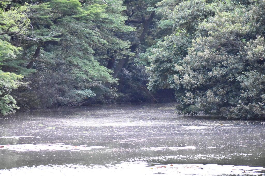 明治神宮の池