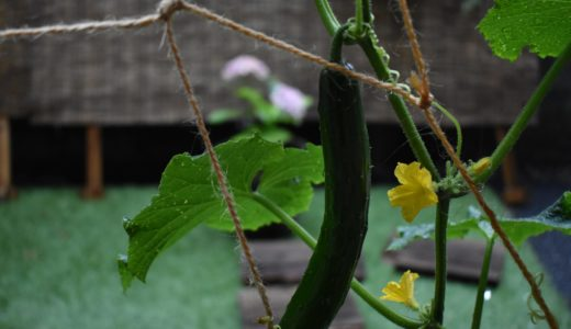身の回りのゴミから有機肥料を自給する | 0円からの家庭菜園