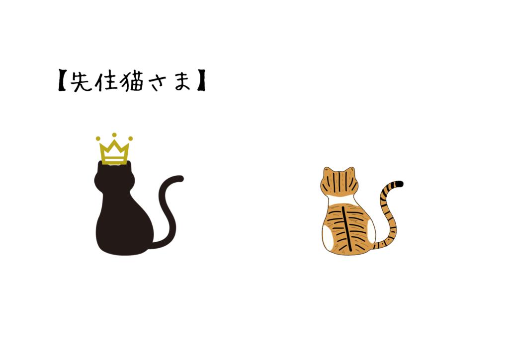 先住猫さま