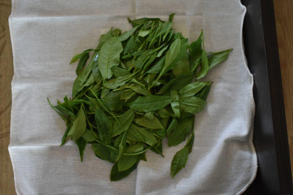 摘んだ茶葉