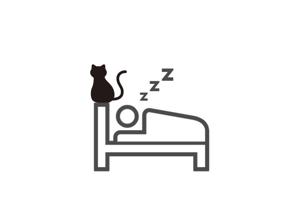 朝の猫との駆け引き