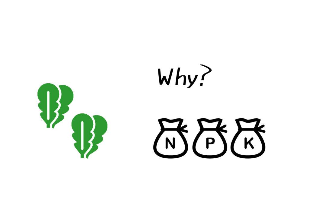 なぜ植物に肥料は必要なのか